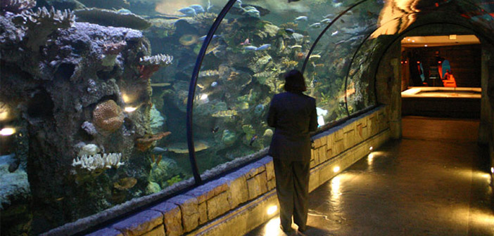 Shark Reef Aquarium Las Vegas